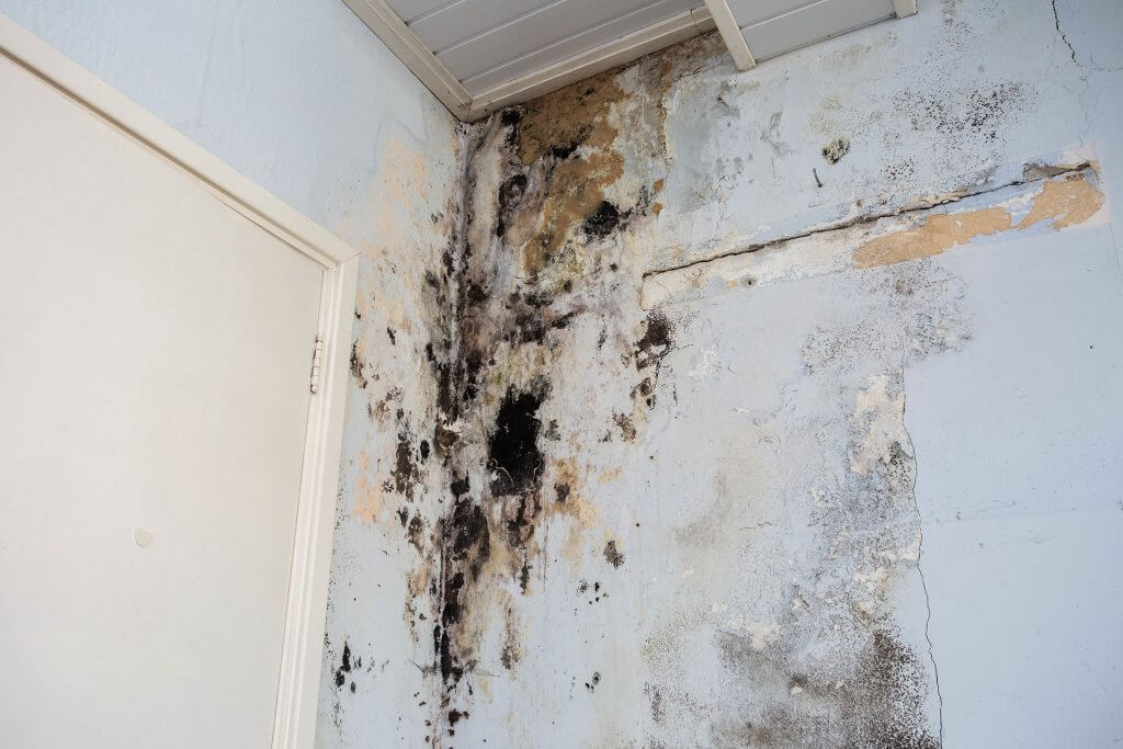 damp and mold on the interior walls of property in Glasgow
